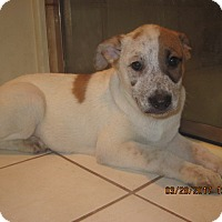 Adopt A Pet :: PUPPIES - La Mesa, CA