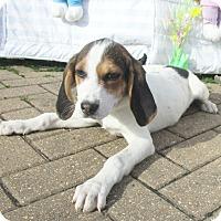 Adopt A Pet :: Nicki - West Chicago, IL