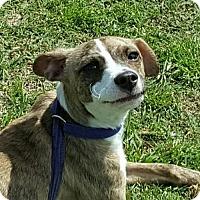 Adopt A Pet :: Lenny - Tuttle, OK