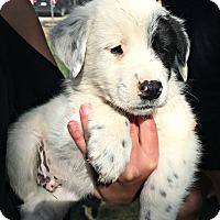 Adopt A Pet :: Zolu - Boulder, CO
