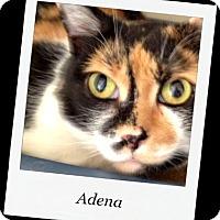 Adopt A Pet :: Adena - Tombstone, AZ