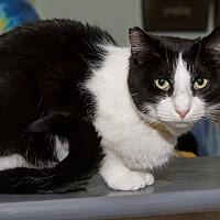 Adopt A Pet :: Walda - Columbus, OH