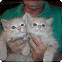 Adopt A Pet :: Walley & Willie - Riverside, RI