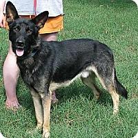 Adopt A Pet :: Cody - Hernando, MS