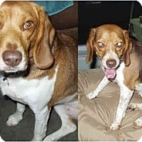 Adopt A Pet :: Heidi and Hanna - Indianapolis, IN