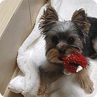 Adopt A Pet :: Penelope - ORANGE COUNTY, CA
