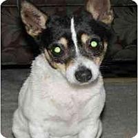 Adopt A Pet :: Jiffy - Gilbert, AZ