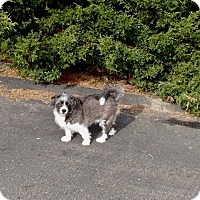 Adopt A Pet :: Barney - Pompton Lakes, NJ