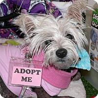 Adopt A Pet :: MONA - Fort Lauderdale, FL