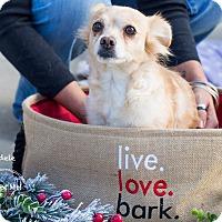 Adopt A Pet :: ADELE - Inland Empire, CA