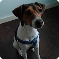 Adopt A Pet :: Gwen - Blue Bell, PA