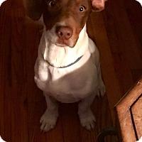 Adopt A Pet :: Fletcher - Washington, DC