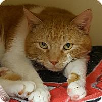 Adopt A Pet :: Rhody - Salisbury, MA
