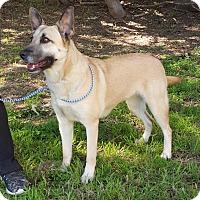 Adopt A Pet :: Roxanne - Portland, ME