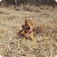 Adopt A Pet :: Ivan-Fostered near Minneapolis - Ada, MN