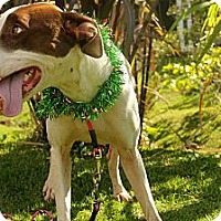 Adopt A Pet :: Venus - Honolulu, HI