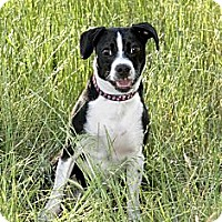 Adopt A Pet :: Marley - Dallas, TX