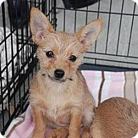 Adopt A Pet :: Callie - Milford, CT