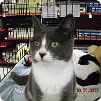 Adopt A Pet :: Aubree - Riverside, RI