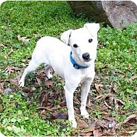 Adopt A Pet :: Jazz - Mocksville, NC