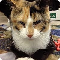 Adopt A Pet :: Mama Precious - Byron Center, MI