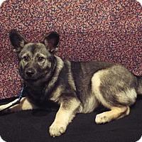 Adopt A Pet :: Pepper - Murphy, NC