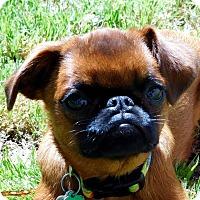 Adopt A Pet :: JILL - ADOPTION PENDING - Little Rock, AR