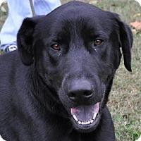 Adopt A Pet :: Harley - Erwin, TN