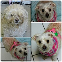 Adopt A Pet :: Claudia - Forked River, NJ