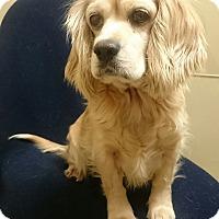 Adopt A Pet :: Ashley - Sugarland, TX