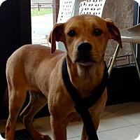 Adopt A Pet :: 2-3