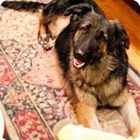 Adopt A Pet :: Augustus - Houston, TX