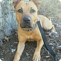 Adopt A Pet :: Winslow - Nashville, TN