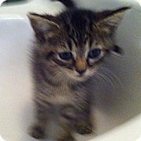 Adopt A Pet :: Maxine - Cocoa, FL
