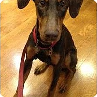 Adopt A Pet :: Rudi--adopted!! - New Richmond, OH