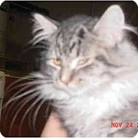 Adopt A Pet :: Mystery - Pendleton, OR