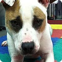 Adopt A Pet :: Agnes - Dennis, MA