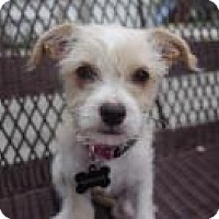Adopt A Pet :: Sissy - 10 weeks old and 4 lbs - Marlton, NJ