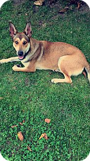 German Shepherd Dog Mix Dog for adoption in Roswell, Georgia - Luna (Guest)