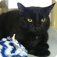 Adopt A Pet :: Kissmas - Hamburg, NY