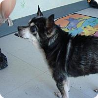 Adopt A Pet :: Chica - Erwin, TN