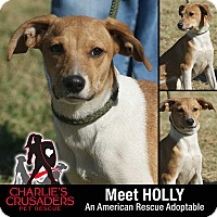 Beagle/Jack Russell Terrier Mix Puppy for adoption in Spring City, Pennsylvania - Holly