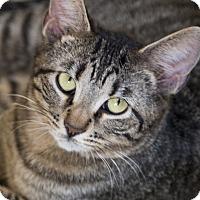 Adopt A Pet :: Maisy - Chicago, IL