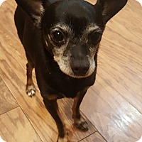 Adopt A Pet :: Blackie - Oakland, MI