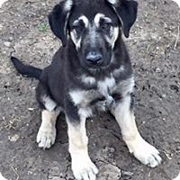 Adopt A Pet :: Toby - McKinney, TX