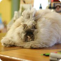 Adopt A Pet :: Queen Elizabeth - Williston, FL