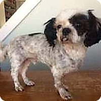 Adopt A Pet :: Tubby - Sudbury, MA