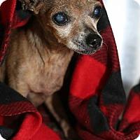 Adopt A Pet :: Holly - Lake Jackson, TX