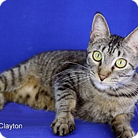 Adopt A Pet :: Clayton - Carencro, LA