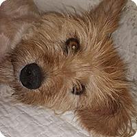 Adopt A Pet :: Lily - Washington, DC